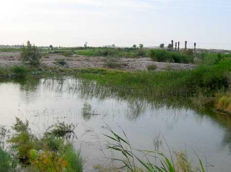 Pond behind green #11