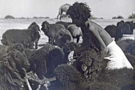 Young Saudi Sheep Herder