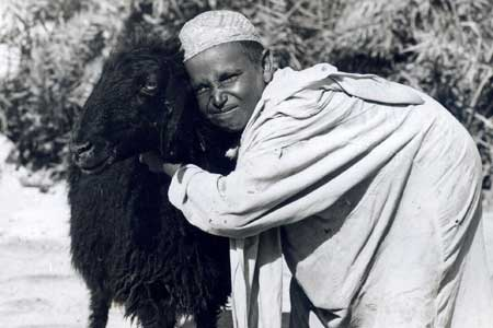 A Saudi Boy with a Sheep