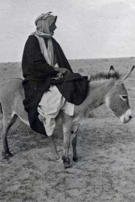 Saudi Man on Donkey