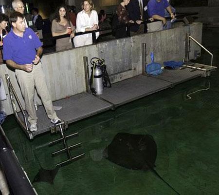 ASC Baltimore Aquarium Event, Part 7 (1)