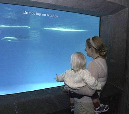 ASC Baltimore Aquarium Event, Part 7 (2)