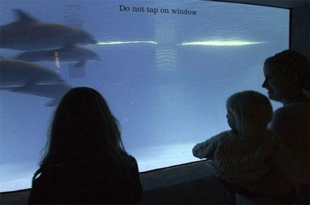 ASC Baltimore Aquarium Event, Part 7 (4)