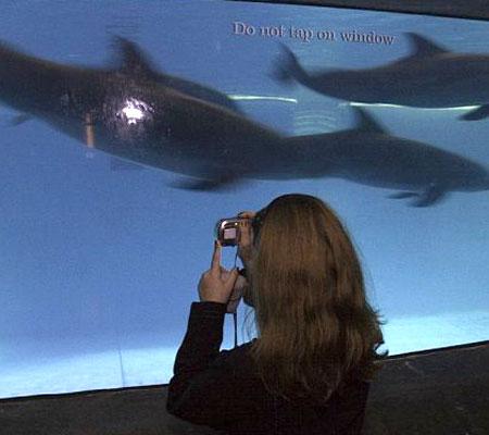 ASC Baltimore Aquarium Event, Part 7 (6)