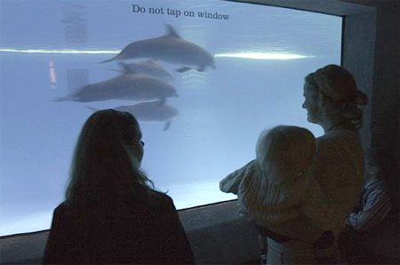 ASC Baltimore Aquarium Event, Part 7 (7)