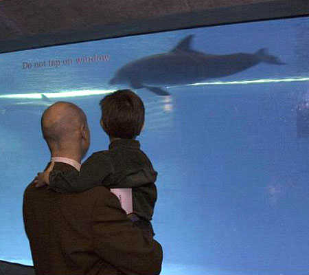Dad and son watch dolphins