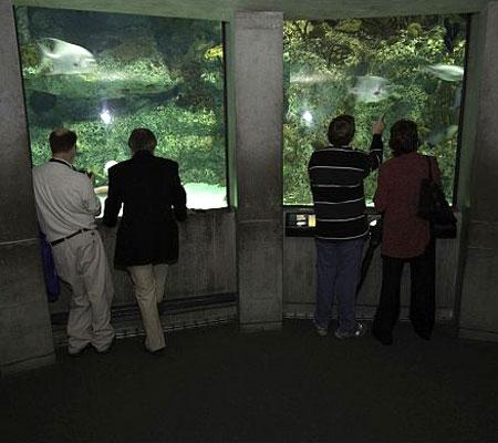 Reuniting while watching fish