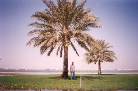 Moasel in Dammam