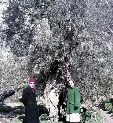 Garden of Gethsemane, 1953
