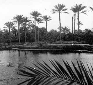 Qatif Gardens