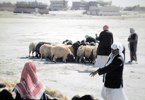 Dinner Al-Hasa Market (2)