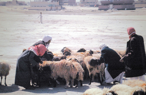 Dinner Al-Hasa Market (1)