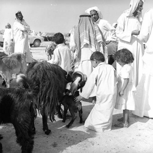Old Al-Hasa (9)