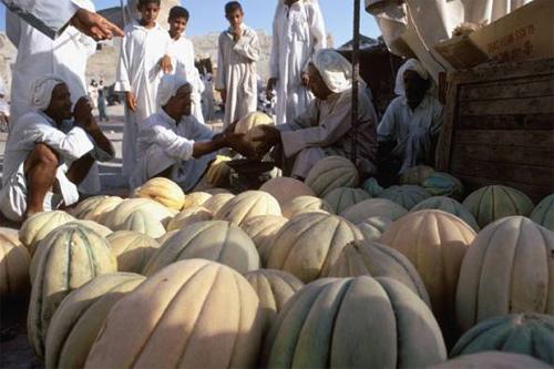 Old Al-Hasa (10)