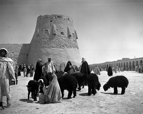 Old Al-Hasa (7)