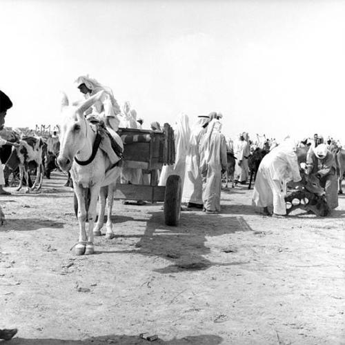 Old Al-Hasa (8)
