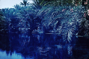 Pond at Qatif