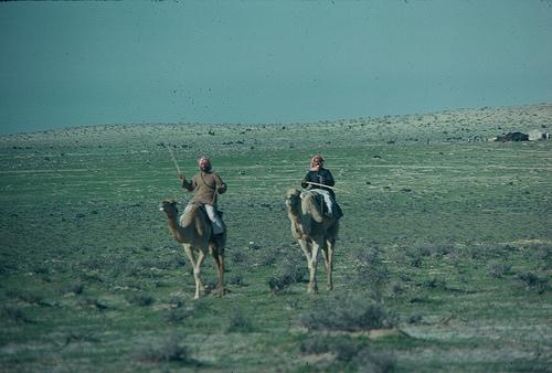 Camel Races Near Manifa (1)