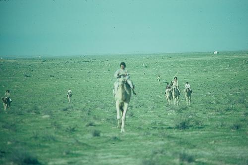 Camel Races Near Manifa (7)