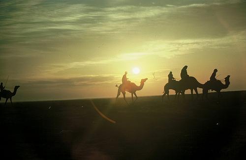 Camel Races Near Manifa (10)