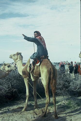 Camel Races Near Manifa (5)