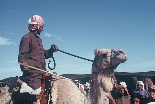 Camel Races Near Manifa (6)