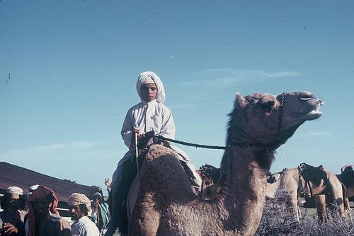 Camel Races Near Manifa (8)