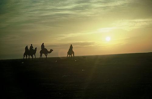 Camel Races Near Manifa (12)