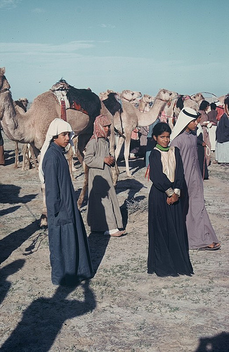 Camel Races Near Manifa (13)
