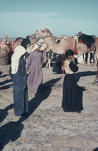 Camel Races Near Manifa (15)