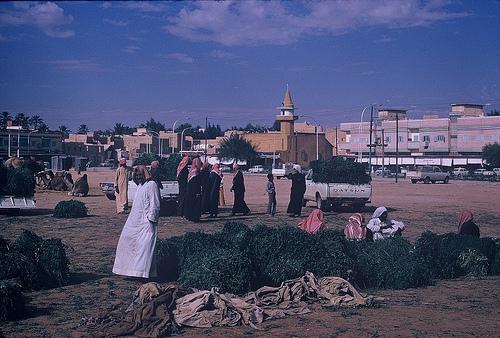 Village in Qasim region (1)