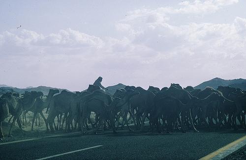 North of Riyadh (2)