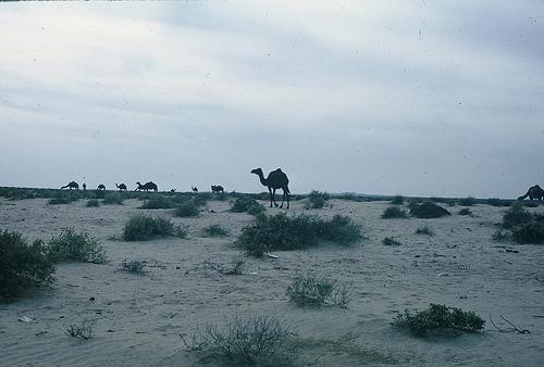 Near Abqaiq (1)