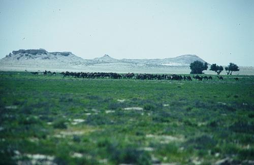 Asir Mountains (12)