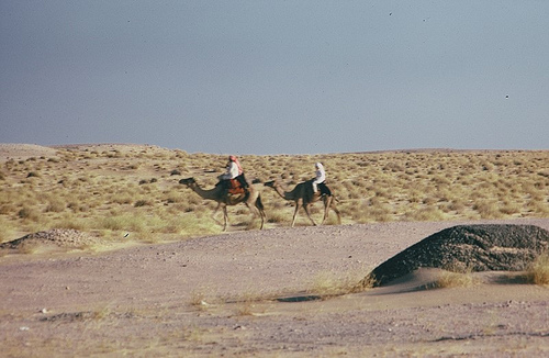 Camel Races Near Manifa (11)