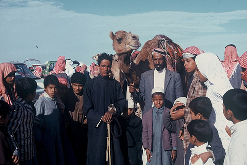 Camel Races Near Manifa (10)