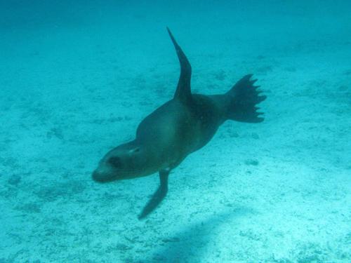 Diving Galapagos! (4)