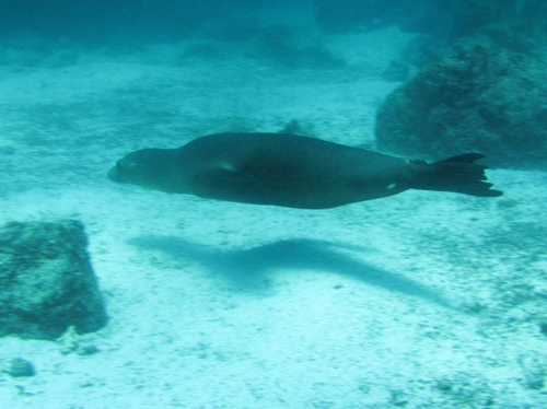 Diving Galapagos! (5)