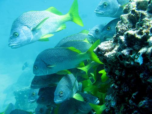 Diving Galapagos! (9)