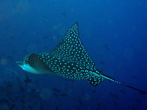Diving Galapagos! (12)