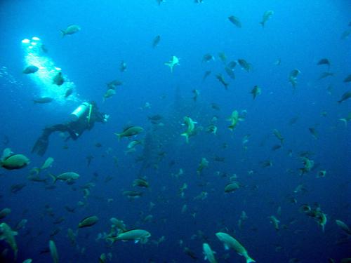 Diving Galapagos! (16)