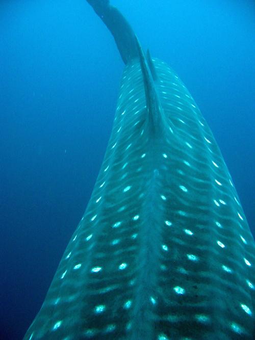 Diving Galapagos! (6)
