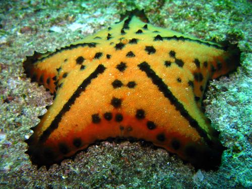 Diving Galapagos! (13)