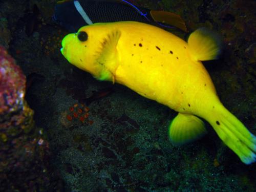 Diving Galapagos!