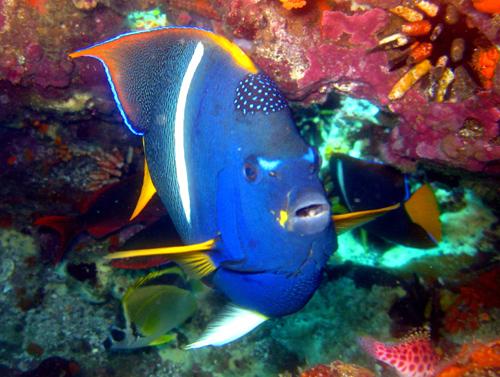 Diving Galapagos! (1)