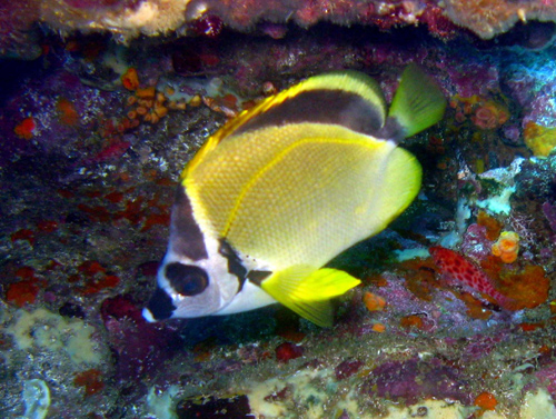 Diving Galapagos! (2)