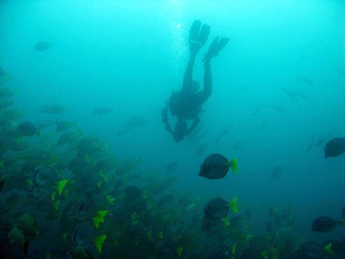 Diving Galapagos! (8)