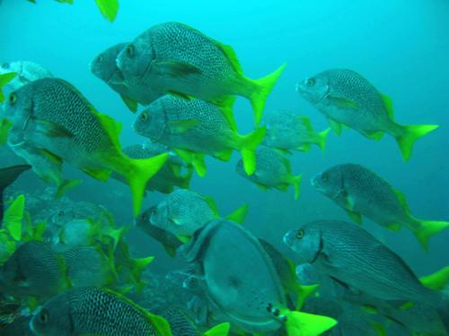 Diving Galapagos! (10)