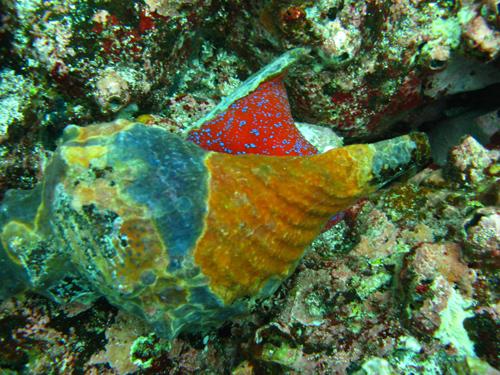 Diving Galapagos! (11)