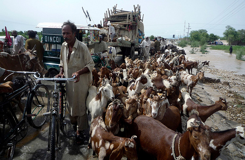2010 Pakistan Floods (18)